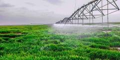 العتبة الحسينية: زراعة 1000 دونم من الحنطة في صحراء كربلاء